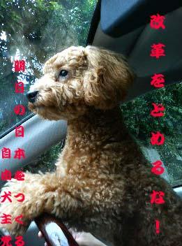 09-kaikaku.jpg